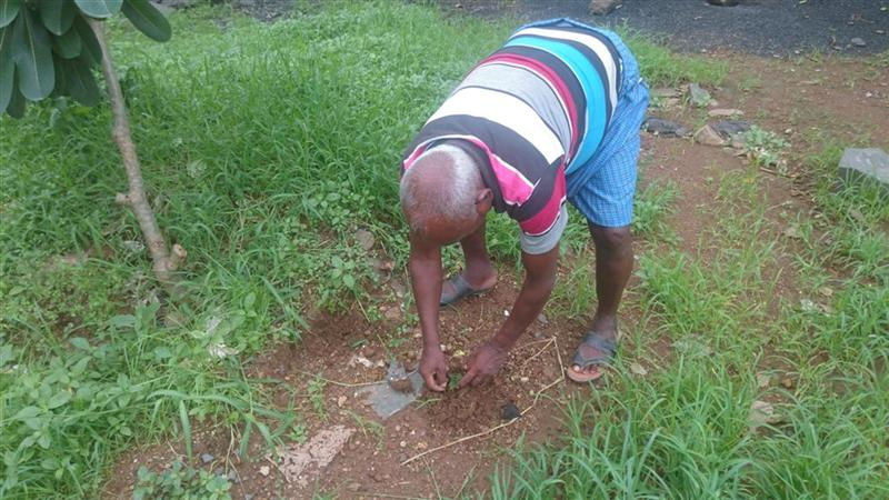 Uncle Planting Near Gate