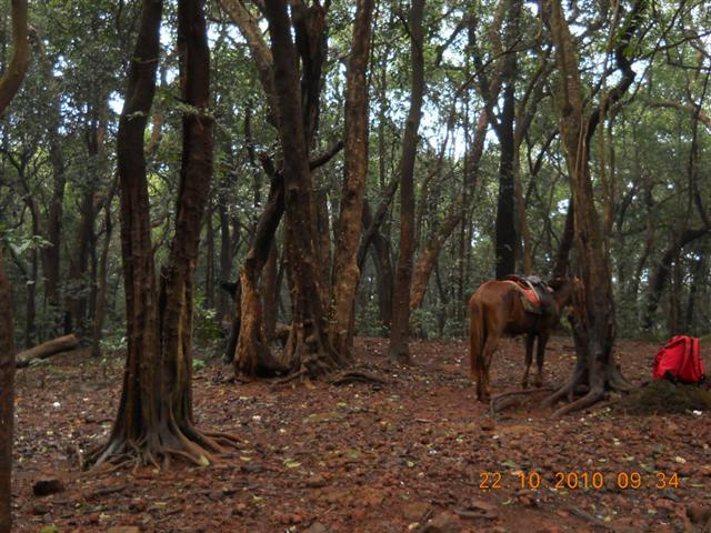 Horse Parked at Matheran Hills