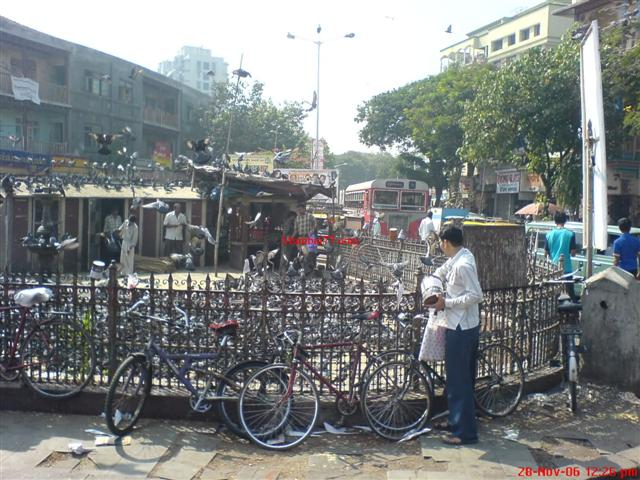 Dadar Kabutar Khana Circle Structure