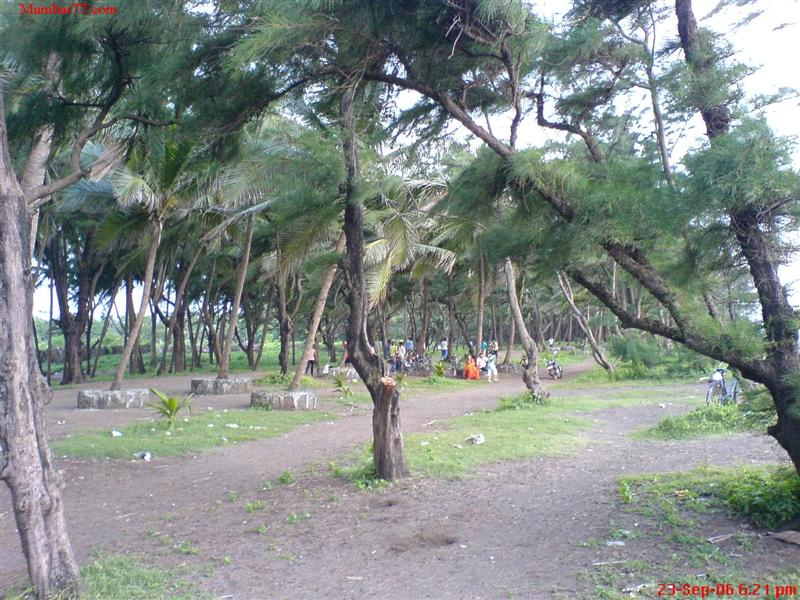 Trees at Arnala Beach Virar