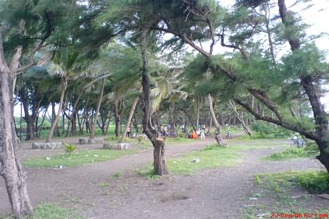 Arnala Beach Trees