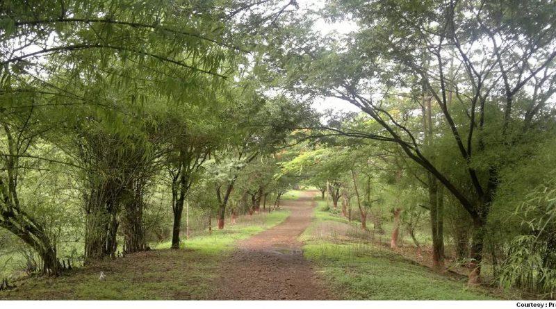 Greenery at Aarey Colony