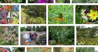 Butterfly Garden Zoo
