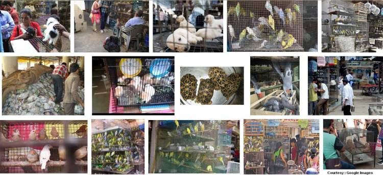 Pet Shops Sale Of Dogs Cats Birds At Crawford Market Mumbai