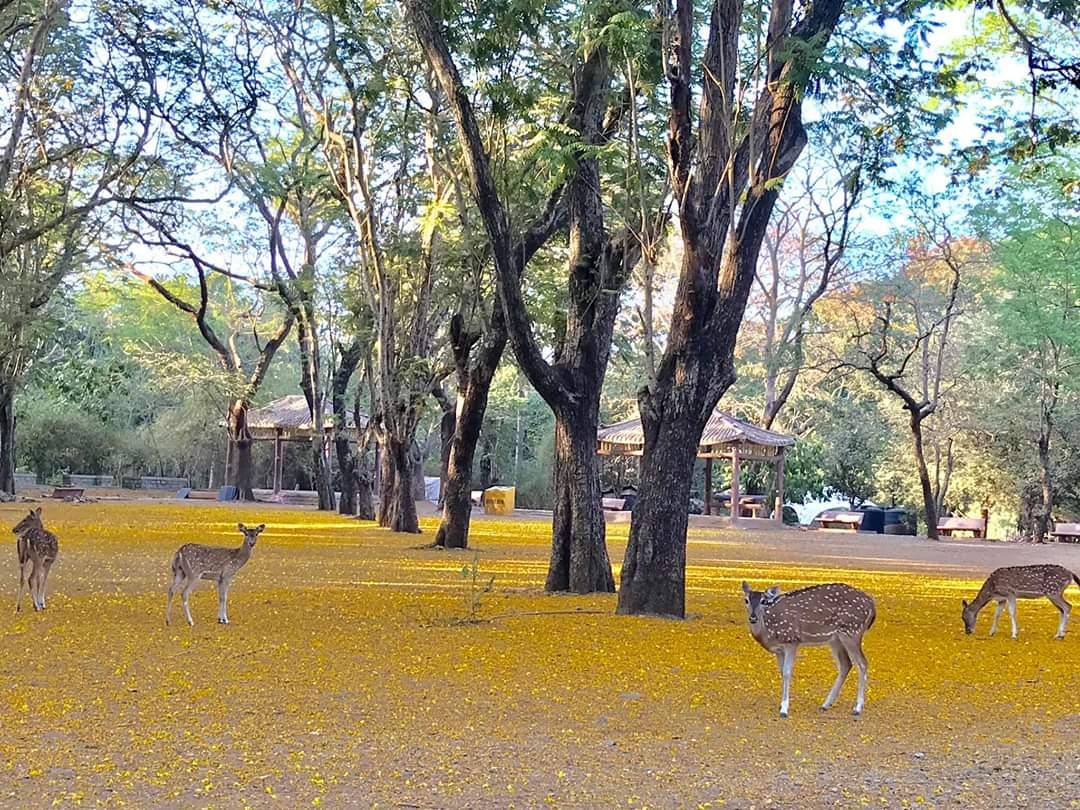 Deers Inside Park