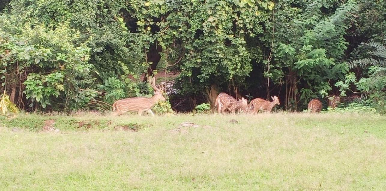 Deers in Group Inside Park