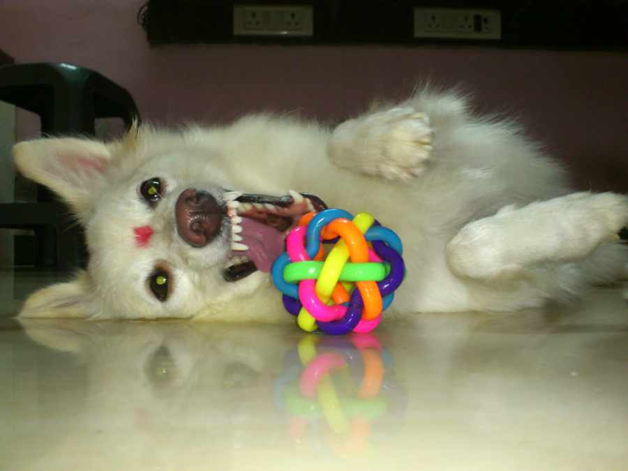 Cutie My Dog