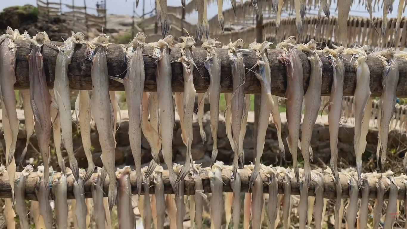 Drying Fishes at Uttan