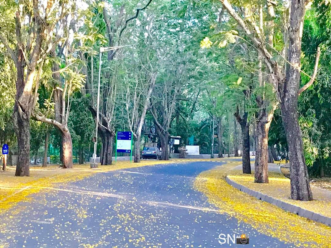 Flowers Spread Across Road