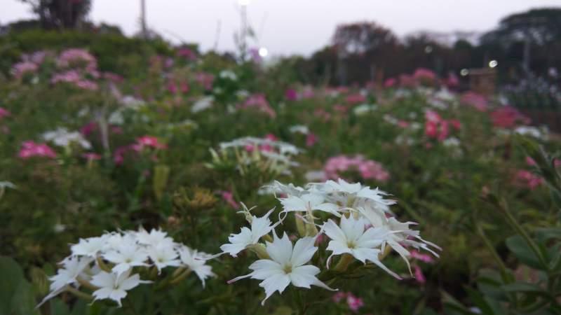 Garden Floras