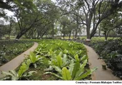 Green Plantations