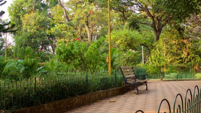 Greenery Inside Park