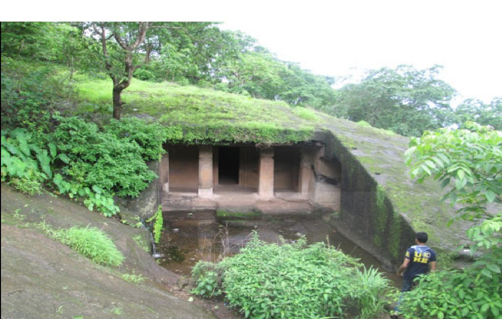 Greenery at Kanheri Caves