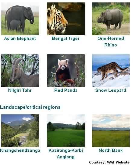 NGO WWF in Mumbai