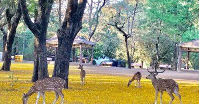 Park During Coronavirus Lockdown