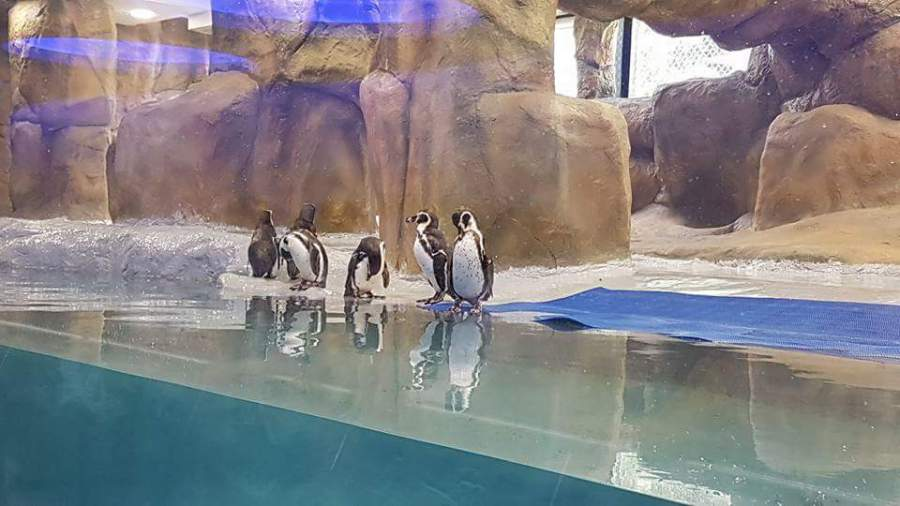 Penguins Inside Zoo