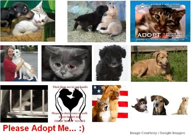 Pet Adoption in City