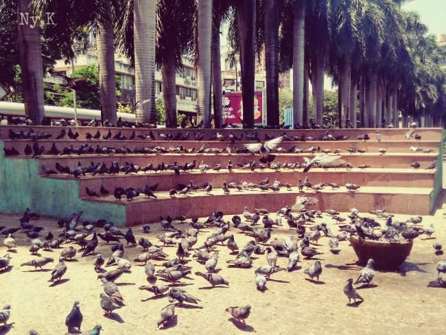 Pigeons Near Talao