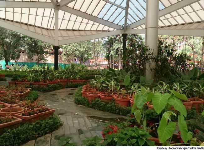 Plantations inside Garden