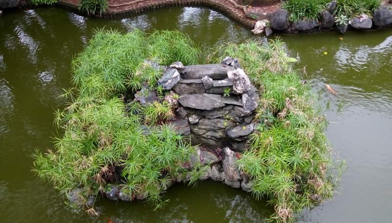 Plants Stones Inside Park Pond