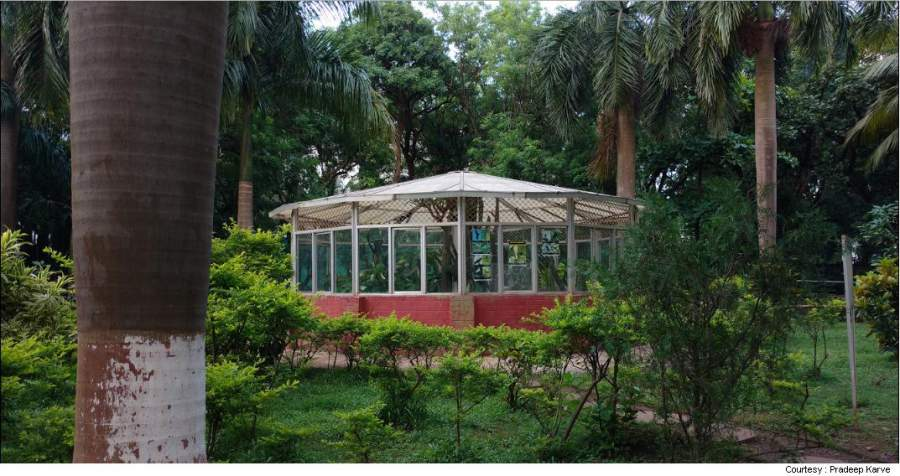 Greenery Inside Sagar Upvan