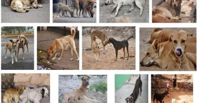 Stray Dogs in Mumbai