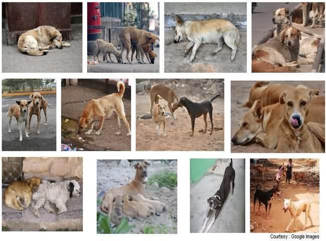Stray Dogs in Mumbai