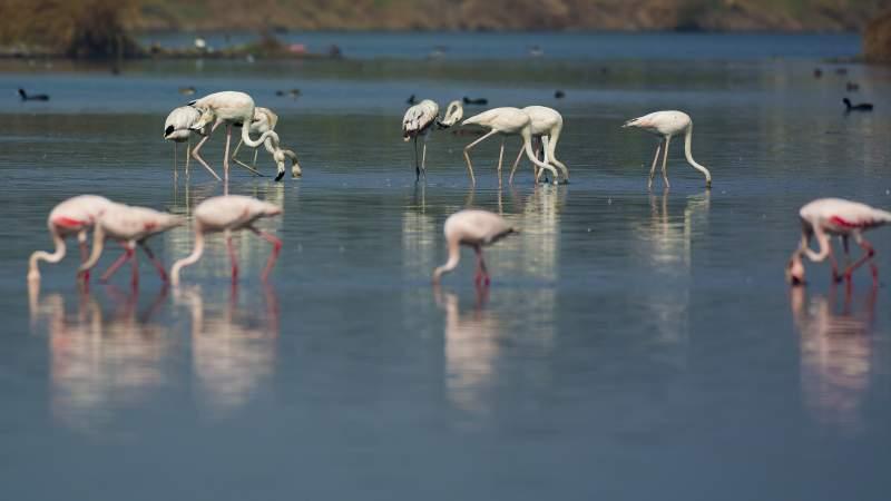 Talawe Nerul Flamingos