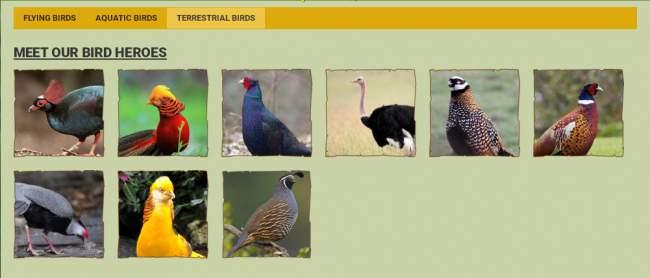 Terrestrial Birds