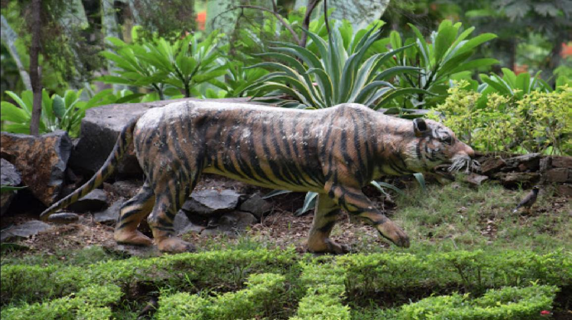 Tiger Safari Area Picture