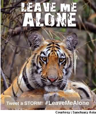 Tigers Says Leave Me Alone