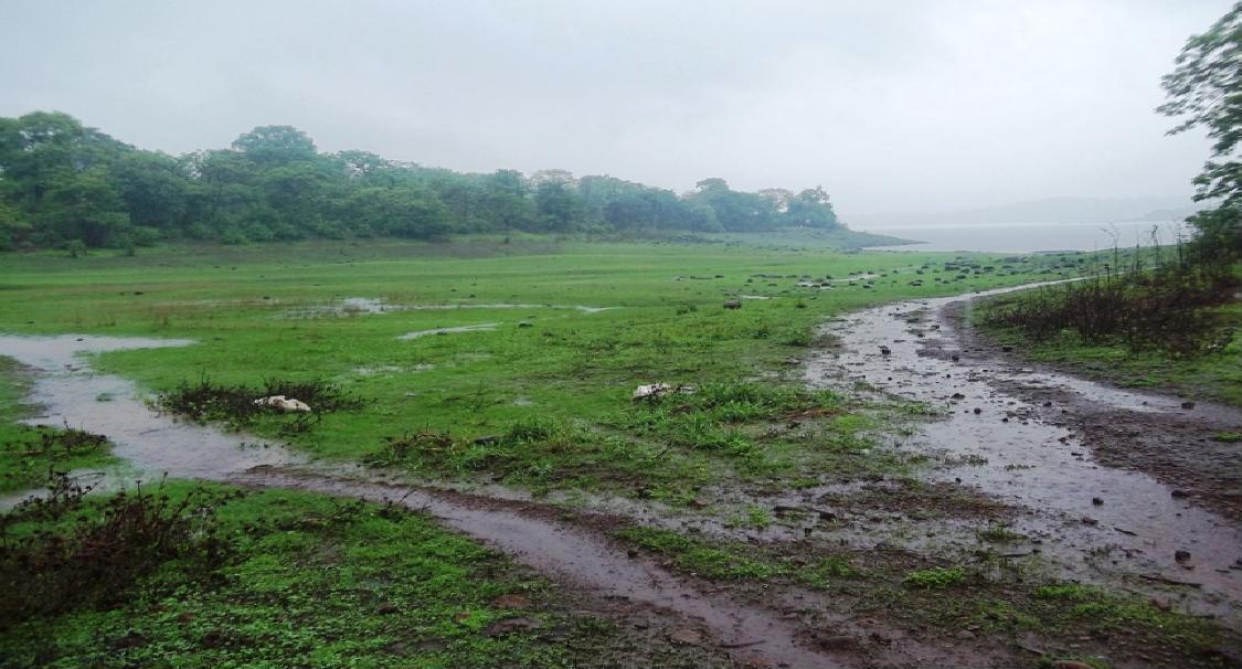 Vihar Lake Sahi Banguda Village
